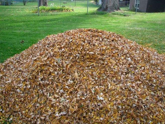 leaf collection loose at curb
